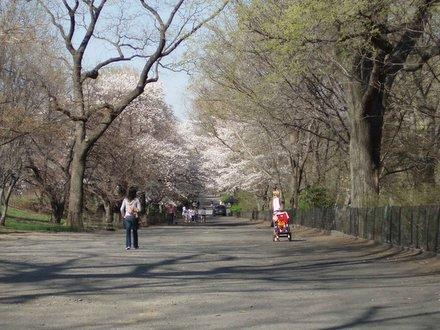Nueva New York Central Park